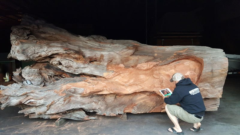 octopus carved from fallen redwood by jeffrey michael samudosky 4 Artist Transforms Fallen Redwood Into Giant Octopus (15 Photos)
