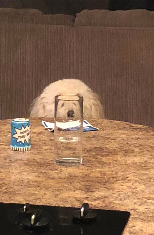 cats dogs behind glasses 3 Pets Behind Various Glasses (15 Photos)