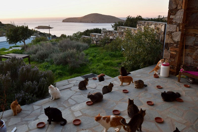 job post goes viral as cat sanctuary on greek island seeks caretaker 7 Job Post Goes Viral As Cat Sanctuary on Greek Island Seeks Caretaker