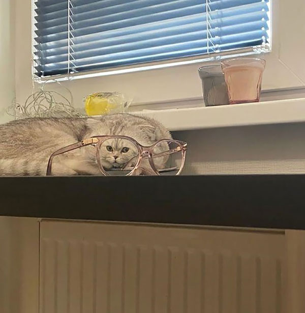 cats dogs behind glasses 10 Pets Behind Various Glasses (15 Photos)