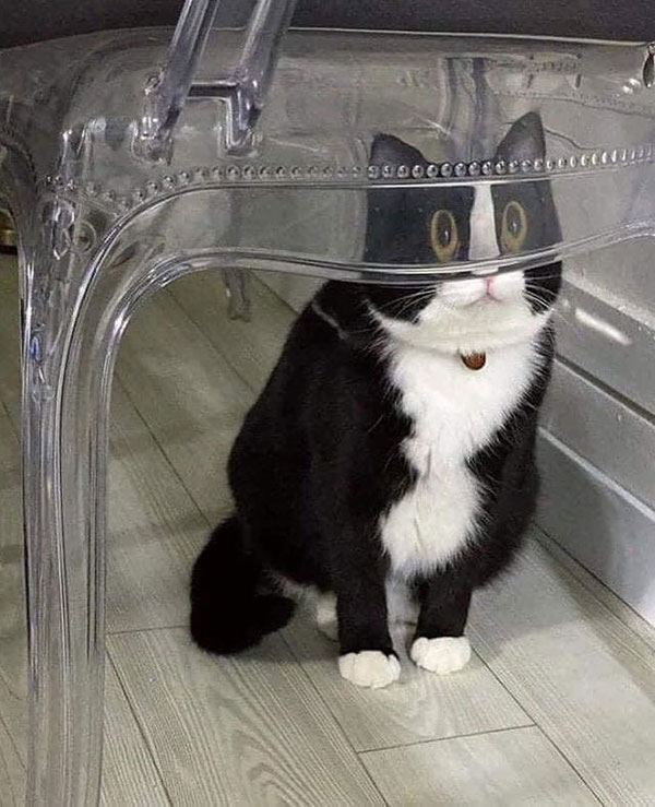 cats dogs behind glasses 16 Pets Behind Various Glasses (15 Photos)