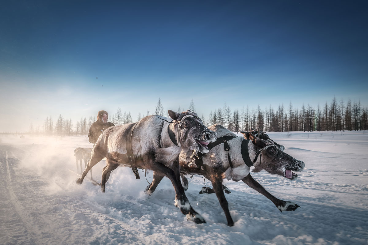 travel credit kamil nureev Amazing Highlights from Smithsonians 14th Annual Photo Contest