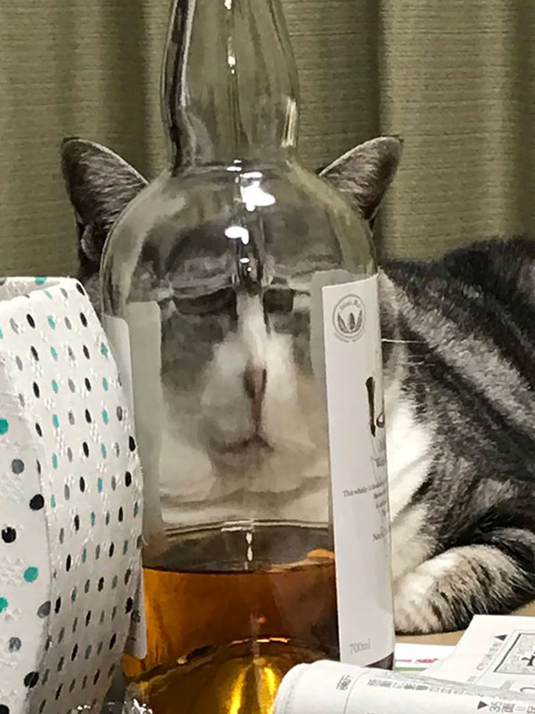 cats dogs behind glasses 13 Pets Behind Various Glasses (15 Photos)