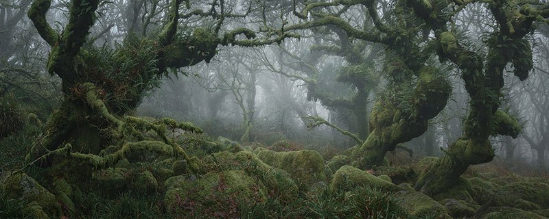 neil burnell wistmans wood photography 12 Nobody Captures the Mystical Wistmans Wood Like Neil Burnell