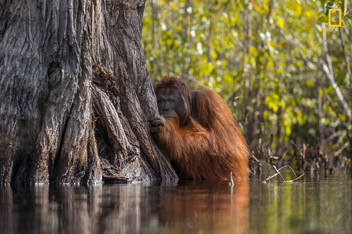 ngnp grandprize 1stplace wildlife The 2017 Nat Geo Nature Photographer of the Year Winners are Here and Amazing