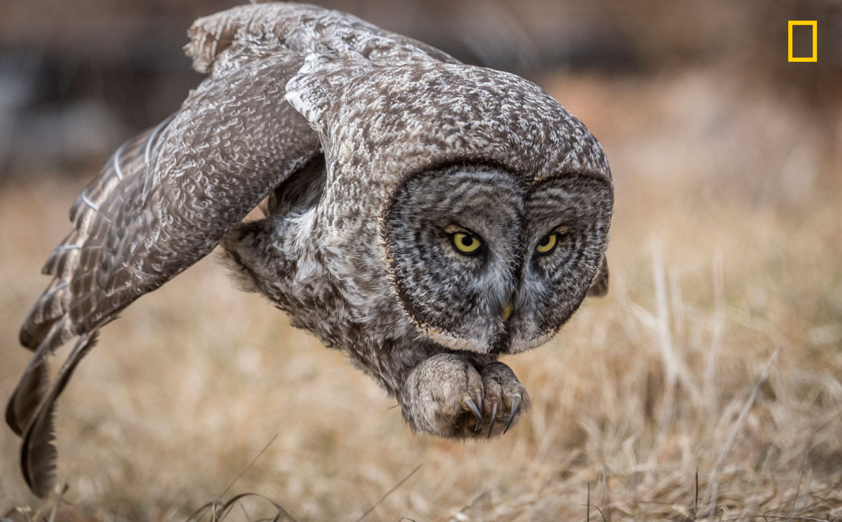 ngnp wildlife peopleschoice The 2017 Nat Geo Nature Photographer of the Year Winners are Here and Amazing